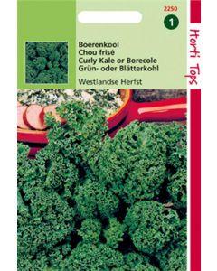 Hortitops Boerenkool Westlandse Herfst, Laat Type