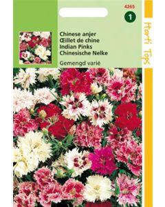Hortitops Dianthus Chinensis Dubbelbloemig Gemengd
