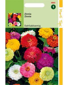 Hortitops Zinnia Dubbele Dahliabl. Gemengd