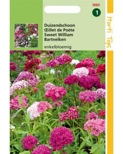 Hortitops Dianthus Barbatus Enkelbloemig Gemengd
