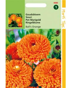 Hortitops Calendula officinalis Dubbelbl. Ball's Oranje
