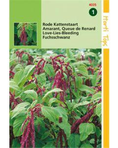 Hortitops Amaranthus Caudatus Rood Kattenstaart