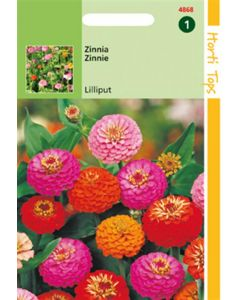 Hortitops Zinnia Liliput/Pompon dubbelbl. gemengd