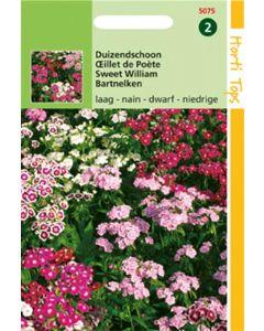 Ht Dianthus Barb. Nanus Compactus D