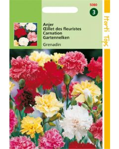 Dianthus Grenadin Gemengd