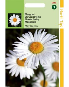 Hortitops Chrysanthemum Vernale Leuc.May Queen