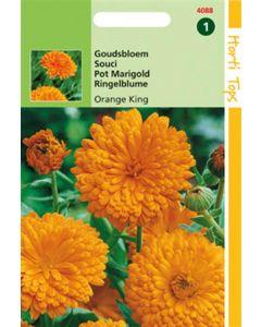 Hortitops Calendula Off. Dubbel Oranjekoning