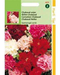 Ht Dianthus Caryophyllus Chabaud Ge