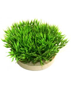 Waterplant Sydeco Green Moss 7 cm