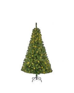 Kerstboom Charlton Gr 140l H185 Nr-138