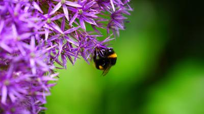 Aantrekkelijke tuin voor bijen, vlinders en andere insecten